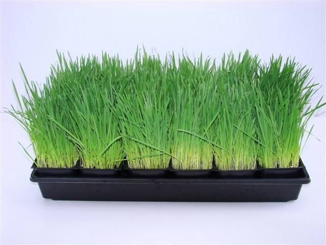 Photo: Cat Grass
