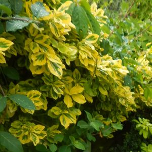 Photo: Spindle Emerald n Gold